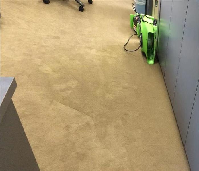 beige carpet, dried with green air mover