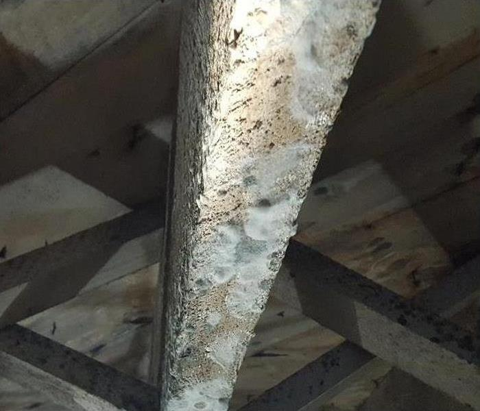 Wood beam with mold damage.