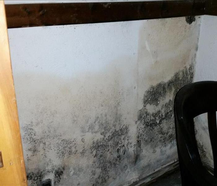 Mold Remediation Possible Mold